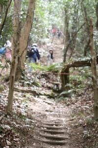 大山桜登山道
