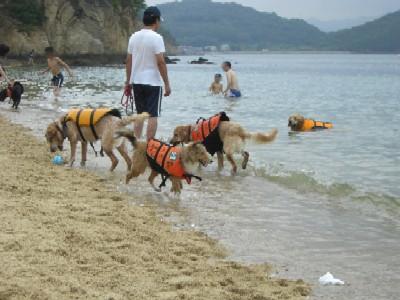 出崎ドッグビーチ