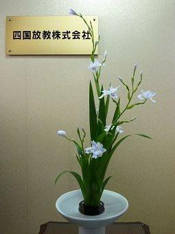 胡蝶花(シャガ)