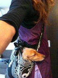 ふろしき犬とはわたしのことです。