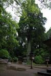 狭野神社 御神木