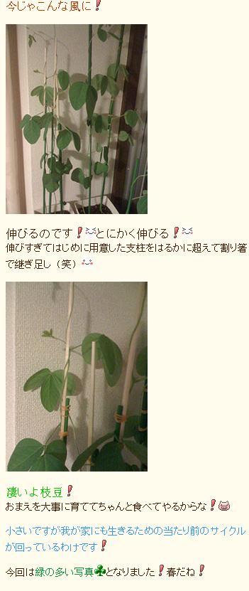 05_20090515174052.jpg