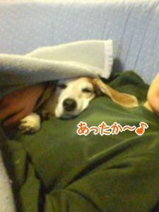 03_20091105142013.jpg