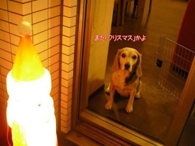 06_20091225101940.jpg