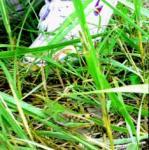 grass-hoper!.jpg
