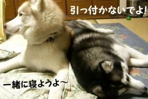2008 闘病記 051