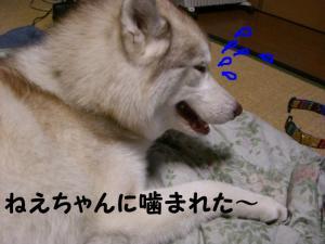 2008 闘病記 053