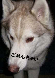 2008 梅 018