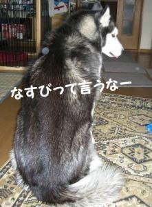 2008 3月瑠璃ちゃんとカフェ 009