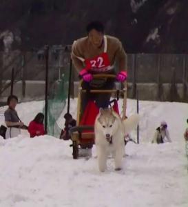 2008 湯沢犬ぞり 007