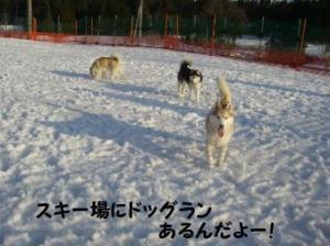 2008 湯沢犬ぞり 045
