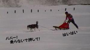 2008 湯沢犬ぞり 012