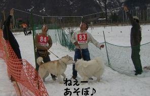 2008 湯沢犬ぞり 068