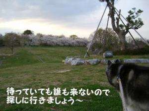 2008 桜 019