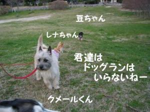 2008 桜 031