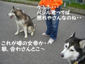 2008 大高ドッグラン 005