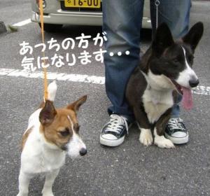 2008 大高ドッグラン 011