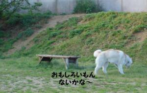 2008 大高ドッグラン 026