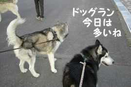 2008 大高ドッグラン 034