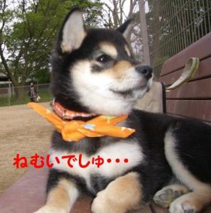 2008 大高ドッグラン 053