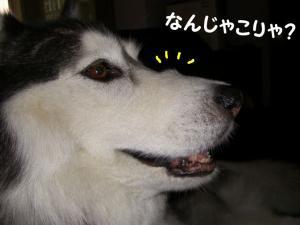 200806 ブログ用 023