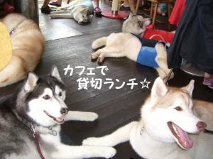 200806 ブログ用 6月 008