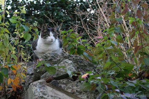 石の上にもネコ。