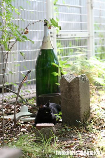 フルボトルと黒ネコさん。
