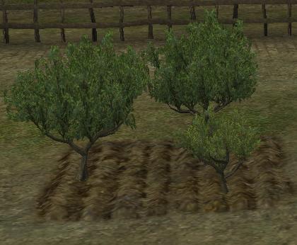 20081008木の成長