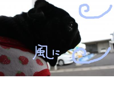 snap_ichigo1smile_200974184048.jpg