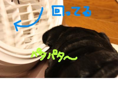 snap_ichigo1smile_200985202355.jpg