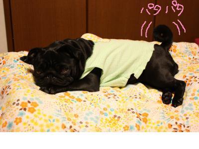 snap_ichigo1smile_200995143355.jpg