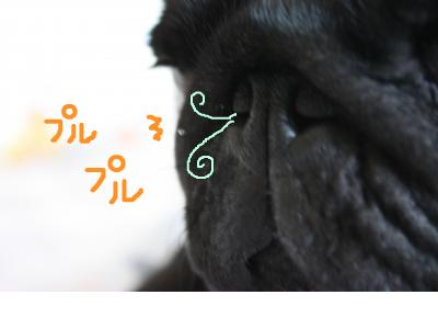 snap_ichigo1smile_200996172429.jpg