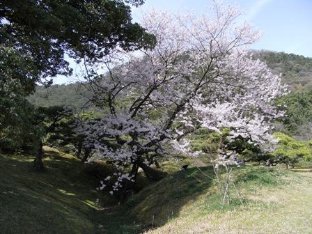 Ritsu8.jpg