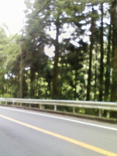 箱根の木立