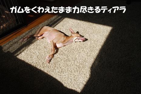 陽だまり5