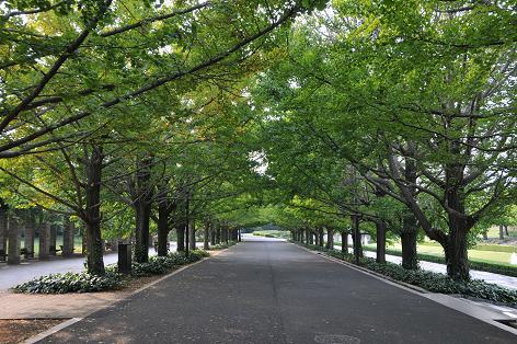 昭和記念公園3.5