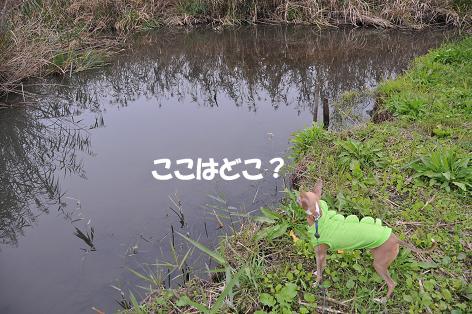 釣りとラン1