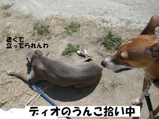 すぐに座り込むトト。土の上だって暑かろうに。