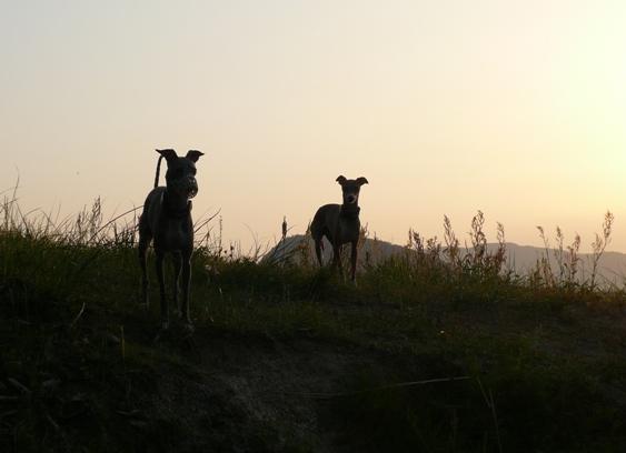 夕日に浮かぶ、トトとディオ