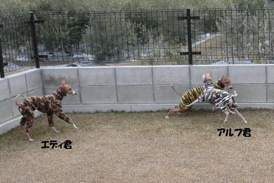 タイガーブラザーズ VS ソルジャーブラザーズ