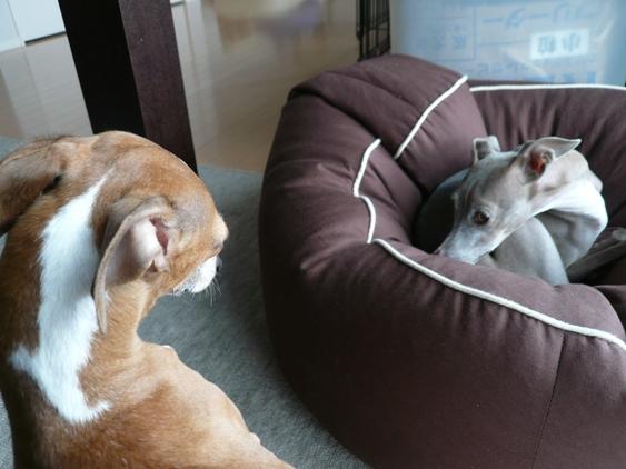 ベッドを羨ましそうに見つめるディオ