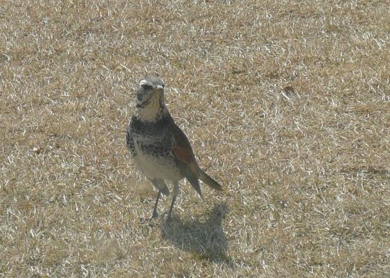 これは・・何ていう鳥だ??
