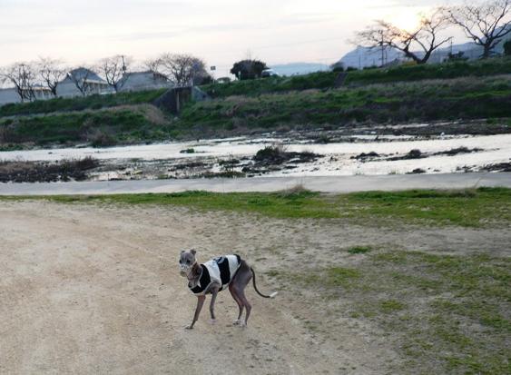 夕暮れの河川敷。