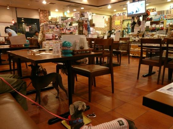カフェ店内の様子。写ってない右の方にはリードなども売ってました。