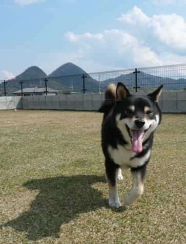 日本犬は山が似合う