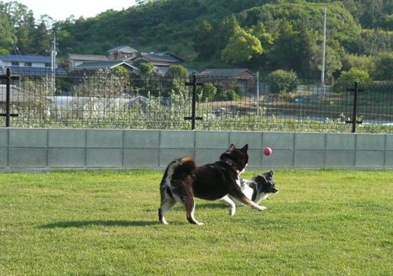「ボール=モモのもの!」