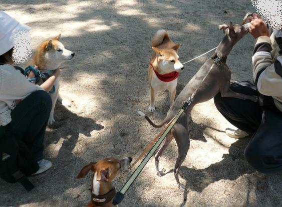他の犬より一歩前へっ!
