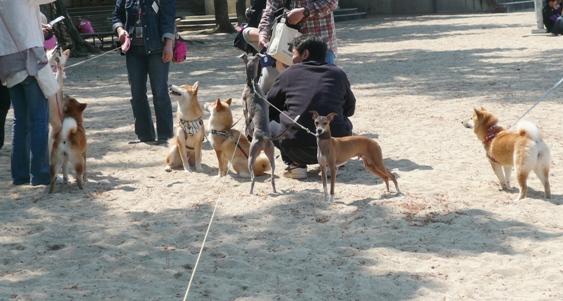 犬が集まってると、おやつがないか必ずチェックに行くトト