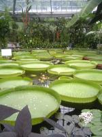 バナナワニ園1